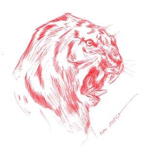 tiger09_408128.jpg