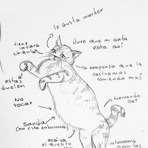 Un mini estudio de la anatomía de mi gata