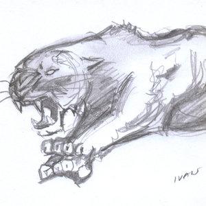 tiger08_408500.jpg