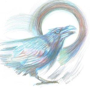 crow_408909.jpg
