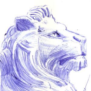 lion05_383648.jpg
