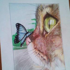 Mariposa en hocico de Gato