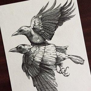 Raven_384585.jpg