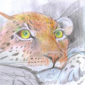 leopardo04_385437.jpg