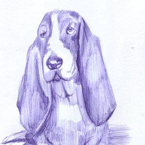 dog24_385617.jpg