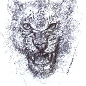 leopardo03_385618.jpg