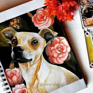 •Mi perrito Duke•