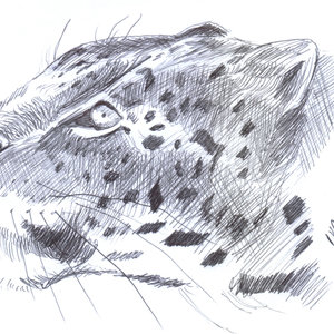 leopardo01_386145.jpg