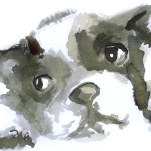 dog26_386372.jpg