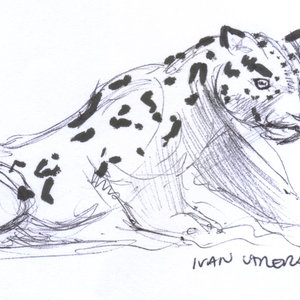 leopardo_386373.jpg