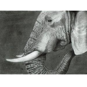 elefante_388719.jpg