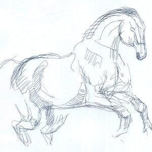 horse013_391440.jpg