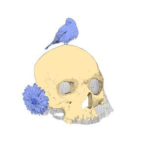 skullsinfondo_428916.png