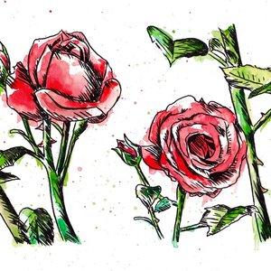 rosas_rojas_429888.jpg