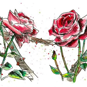 rosas_rosas_429887.jpg