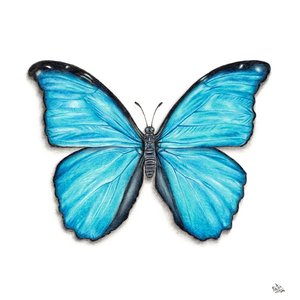mariposa_celeste_435296.jpg