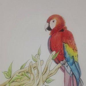 Gea y Papagayo