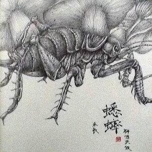 Koorogi, 蟋蟀, grillo