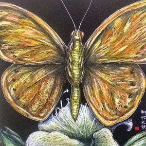 蝶々、Mariposa