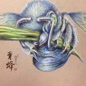 Abeja. 蜂 Bee