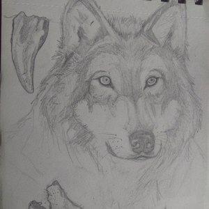 Lobo estudio