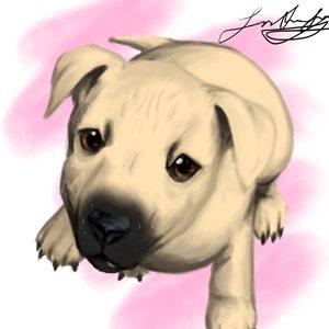 El perrito de un amigo