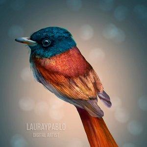bird_practice_by_lauraypablo_de75qkq_fullview_454325.jpg