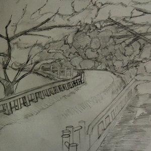 BRIDGE_N_trees_454511.jpg