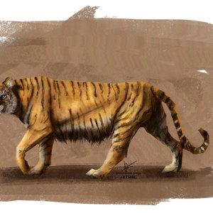 tiger_study_1000px_455123.jpg