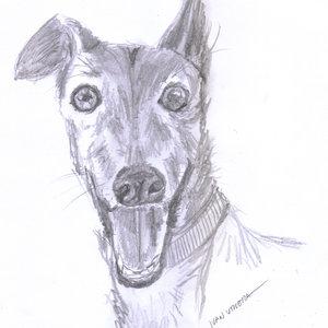 perro a lapiz