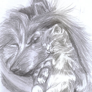 perro y gato a lapiz
