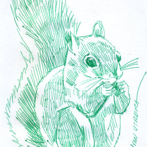squirrel01_417649.jpg