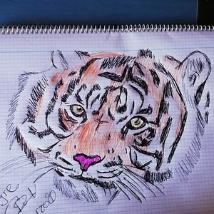 Tigre a color