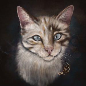 Kitty_428735.jpg