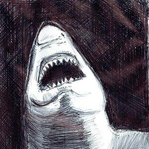 shark03_464823.jpg