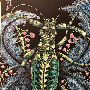 escarabajo_tigre_464921.jpg
