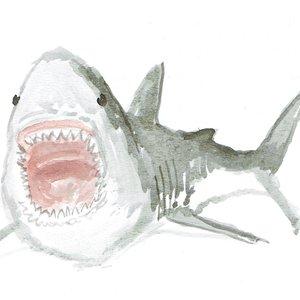 shark04_465017.jpg