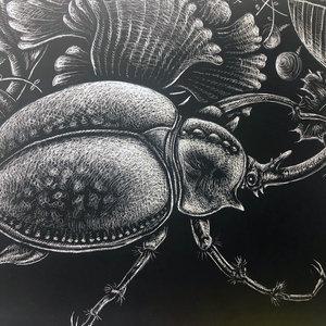escarabajo_457264.jpg