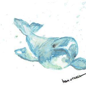 dolphin_471541.jpg