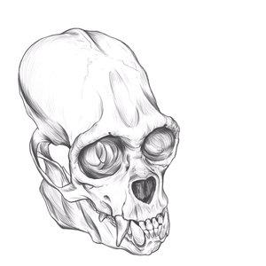 wolly_monkey_Skull_drawing_473497.jpg