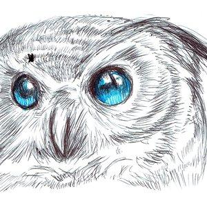owl03_475499.jpg