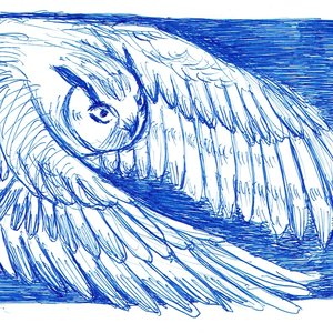 owl01_475942.jpg