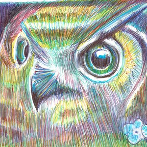 owl02_475940.jpg