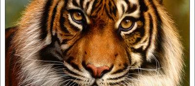 Dibujar_desde_cero_un_tigre_con_Corel_Photopaint_11610.jpg