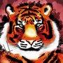 tiger_colour_79368.png