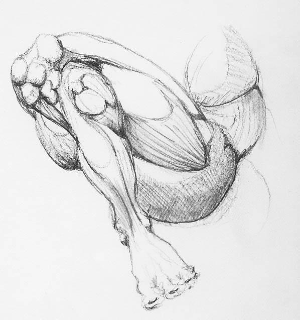 Estudios de anatomía II por Royalfiery | Dibujando