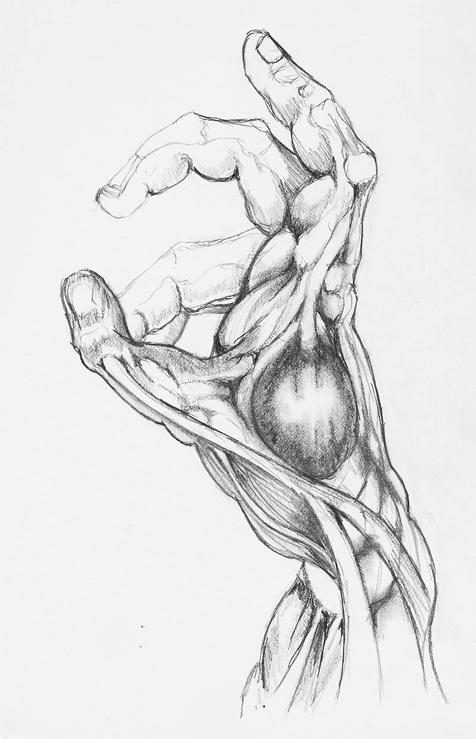 Estudios de anatomía I por Royalfiery | Dibujando