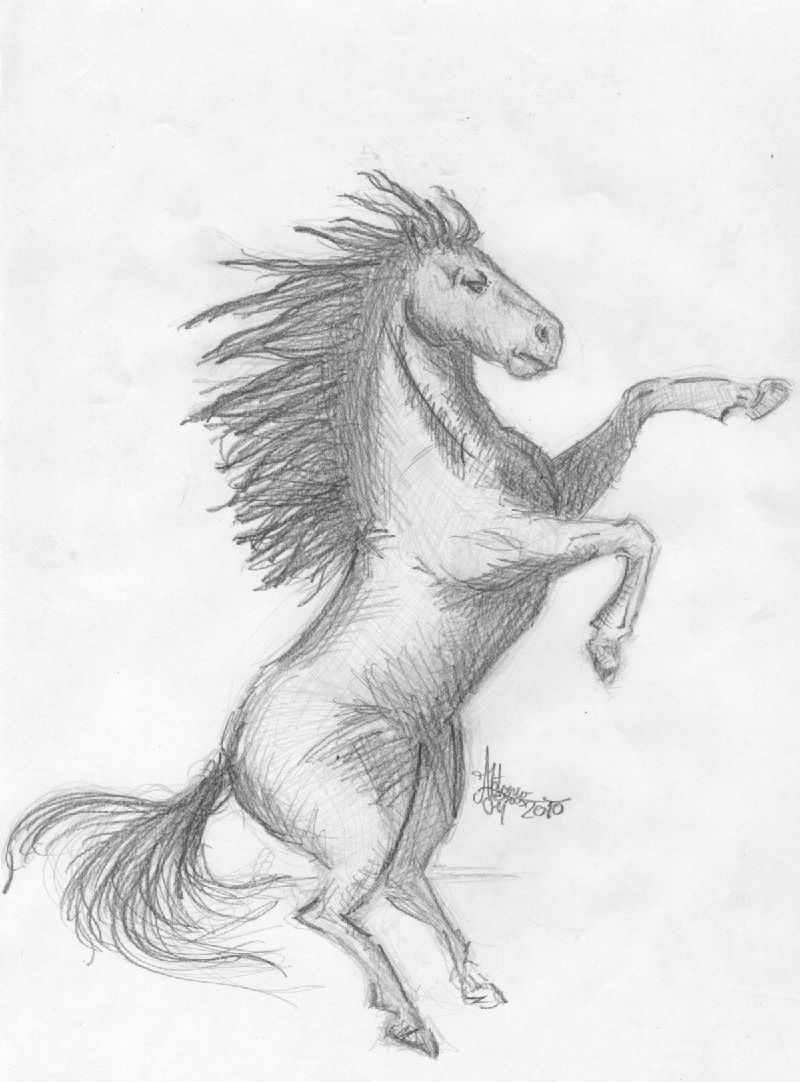 Anatomia del caballo por crespomarvel | Dibujando