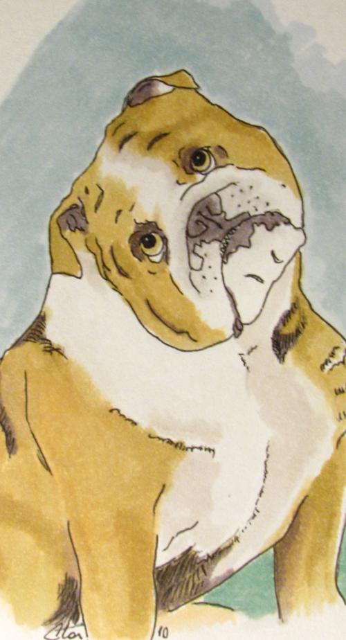 Bulldog_9274.jpg