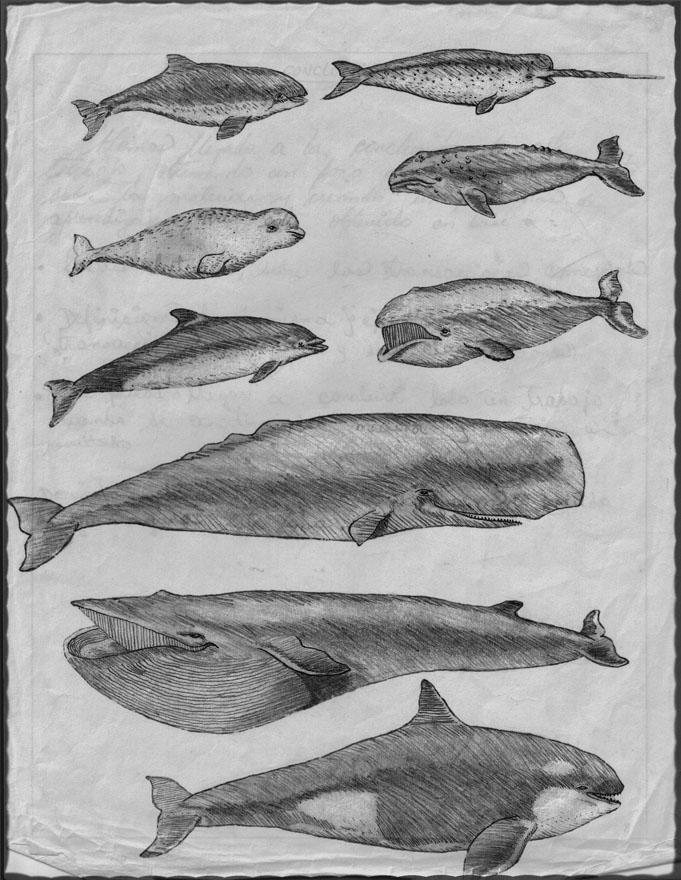 Delfines y ballenas por cris-t-alex | Dibujando
